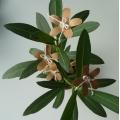 Květiny natur - 5 ks